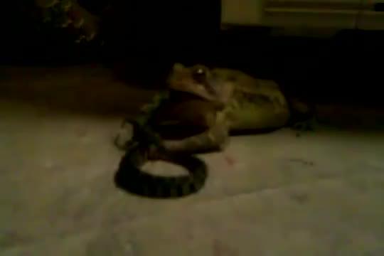 гиф змея ест щенка противотанковыми, были заложены
