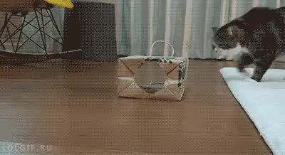 Watch bag GIF on Gfycat. Discover more related GIFs on Gfycat