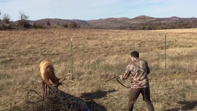 Watch and share Elk GIFs on Gfycat