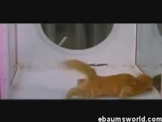 Cat, Cat on LSD GIFs