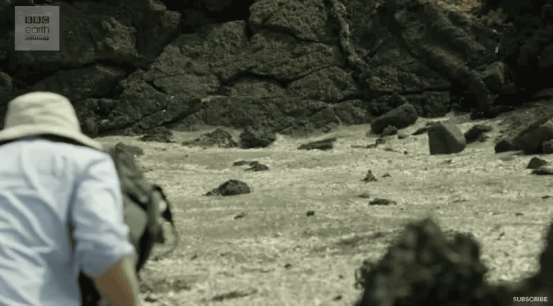 Snakes GIFs