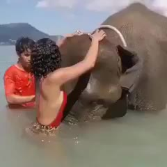 elefante/*/*/*/*/*/*/*/*/*/*/*/*/*/*/*/////////***********************************************---------------------------------------------- GIFs