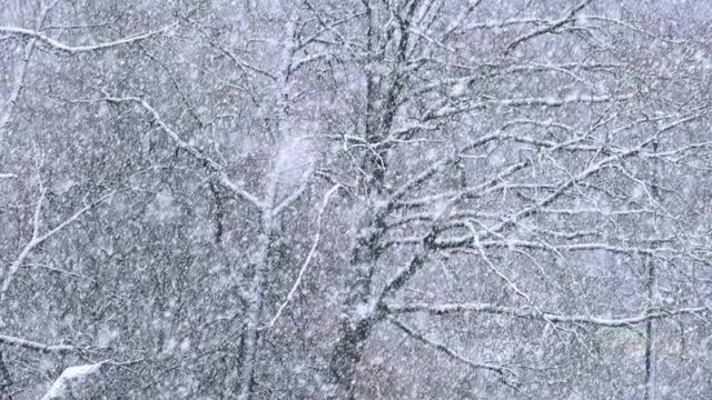 Watch and share Day-heavy-snow GIFs by jamesta696 on Gfycat