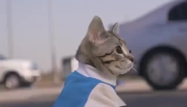 Watch and share Cat Cop Chase GIFs on Gfycat