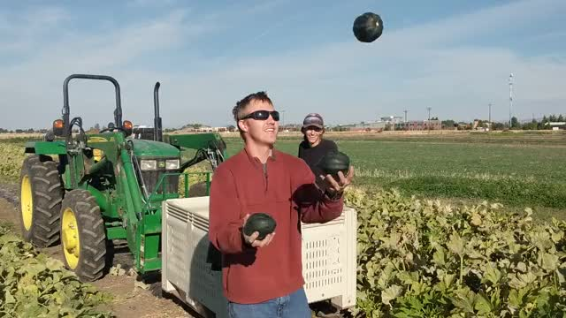 Watch Juggling acorn squash GIF on Gfycat. Discover more related GIFs on Gfycat