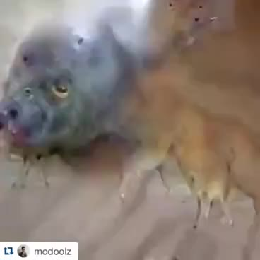 Watch and share Google Deep Dream Frog Video GIFs on Gfycat