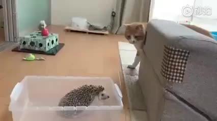 Watch and share Redditsave.com To Hit A Hedgehog-dxv3m2gr19g71 GIFs on Gfycat