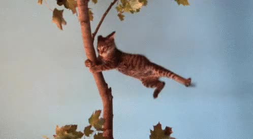 Watch this cat GIF on Gfycat. Discover more cat, hurricane, storm, stormy, tropical storm, wind, windy GIFs on Gfycat