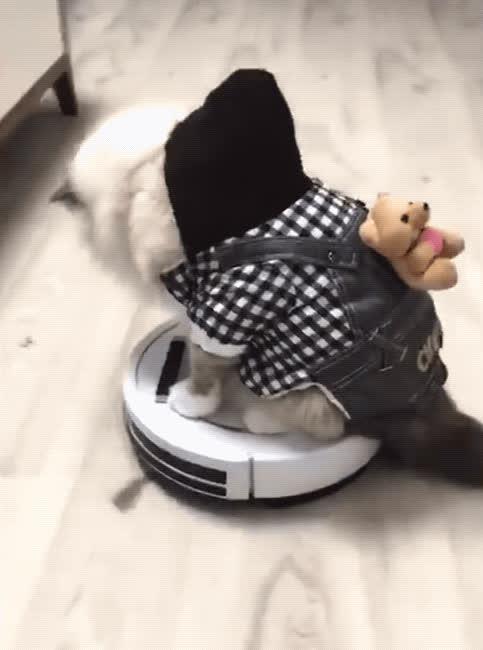 cat, cute, fail, funny, roomba, Cat/Roomba Fail GIFs