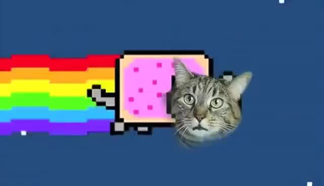 Watch this cat GIF on Gfycat. Discover more cat, nyan, nyan cat GIFs on Gfycat