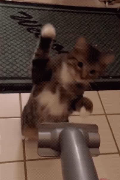 animals, awww, cat, cute, funny, vacuum, Cat vs. Vacuum GIFs