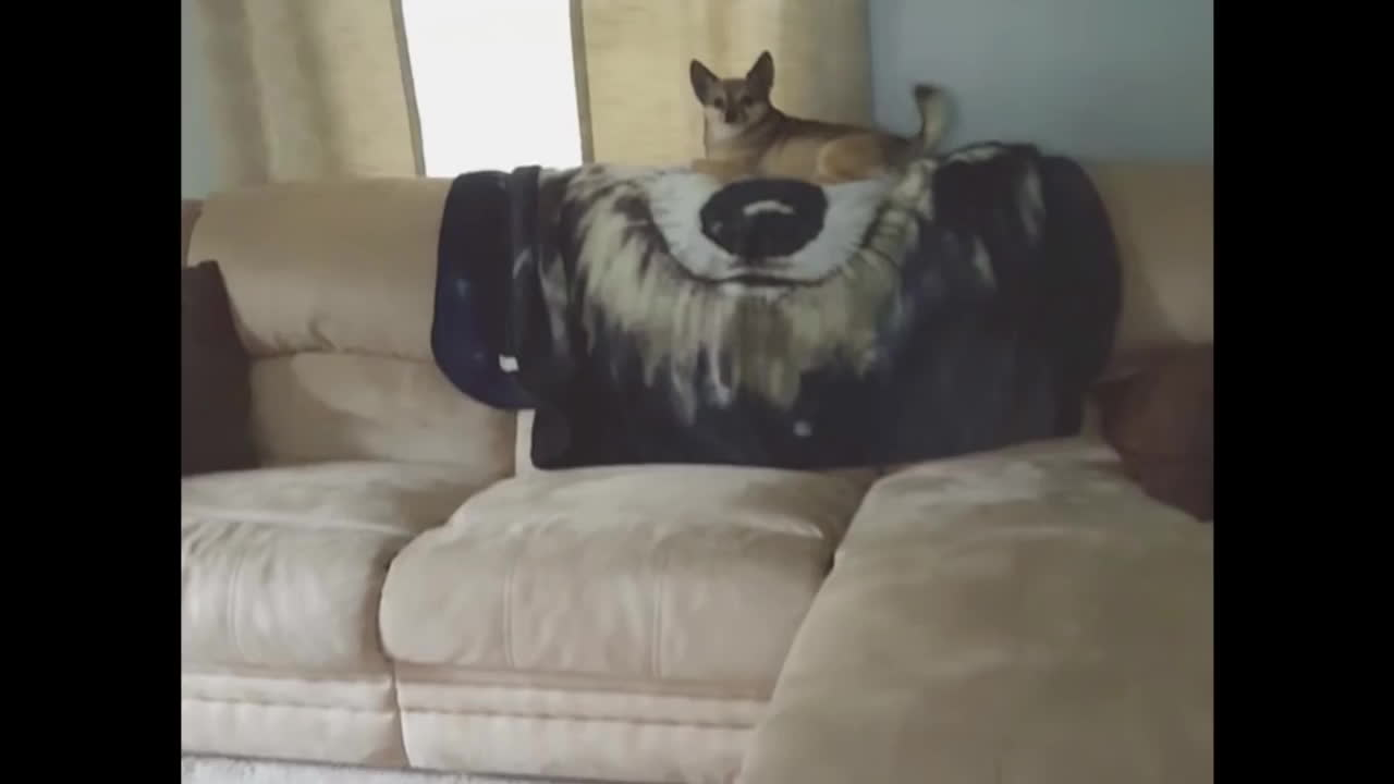 hitmanimals, popular, Dog kills his first contract and Successfully hides the body (reddit) GIFs