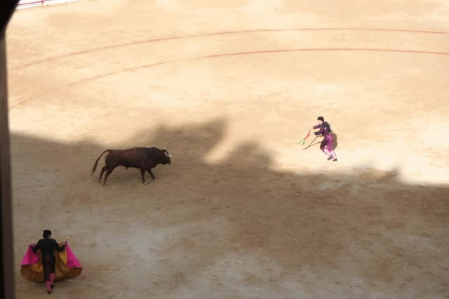 Watch and share Bull Fight GIFs on Gfycat