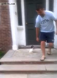 Watch puppy jumps into bush to avoid stairs GIF on Gfycat. Discover more related GIFs on Gfycat