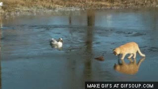 Watch and share Cat Falls Through Ice GIFs on Gfycat