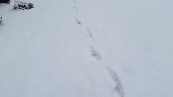 Watch Snow Day (reddit) GIF on Gfycat. Discover more awwgifs, pekingese GIFs on Gfycat