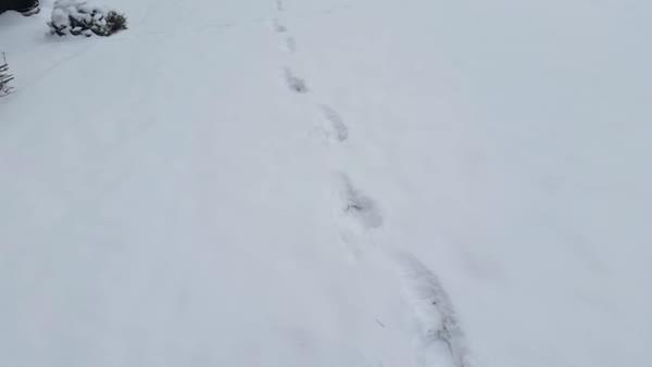 awwgifs, pekingese, Snow Day (reddit) GIFs