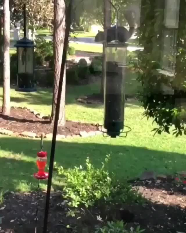 Watch crosspost from /r/fatsquirrelhate (reddit) GIF by Slim Jones (@slimjones123) on Gfycat. Discover more related GIFs on Gfycat