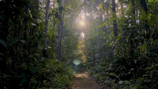 Watch and share Epic-amazon-jungle-walkthrough-A2J5CTX GIFs on Gfycat