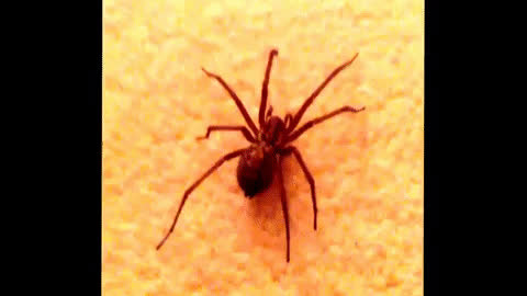 animals, fast, funny, insects, running, spider, wtf, Running spider GIFs