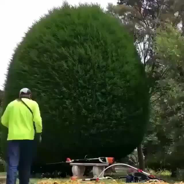 Bush trimming  GIFs