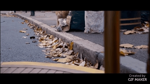 funny, gifs, movies, A Street Cat Named Bob GIFs