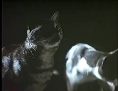 Watch Strays (1991) GIF on Gfycat. Discover more related GIFs on Gfycat