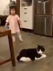 going somewhere AnimalsBeingJerks GIFs