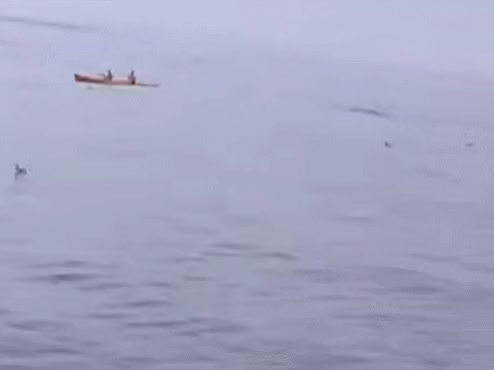Watch and share GIF Kayak V Whale Two GIFs on Gfycat