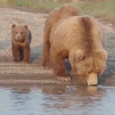 Watch and share Animalpolis GIFs and Igswildlife GIFs by Master1718 on Gfycat