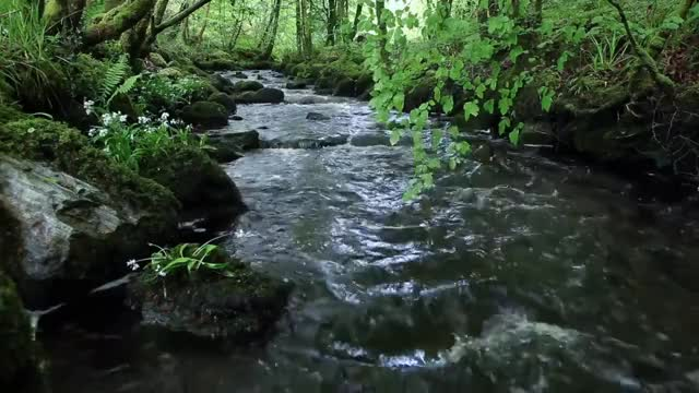 Watch and share Nature Sounds Of A Forest For Relaxing-Natural Soothing Sound Of A Waterfall & Bird Sounds GIFs on Gfycat