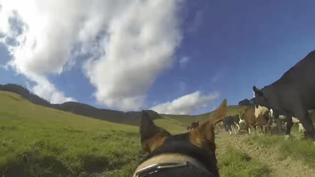 Watch and share Hot Dog Break GIFs on Gfycat
