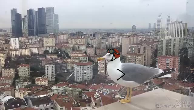 Watch and share It's Gull Time GIFs on Gfycat