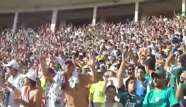 Watch and share Forza Palmeiras GIFs on Gfycat