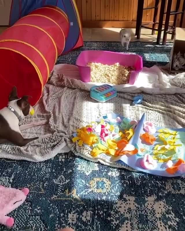Watch and share Pig Zoomies GIFs and Doggo GIFs by lnfinity on Gfycat