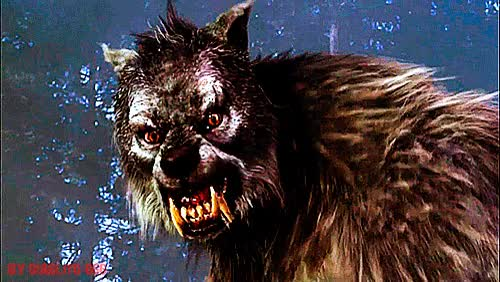 Watch and share El Hombre Lobo The Wolfman Gif GIFs on Gfycat