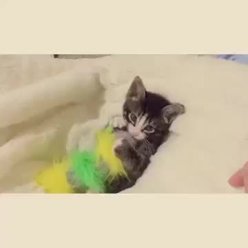 adorable, kittengifs, kittens, Cutest kitten ever wants his toy back GIFs