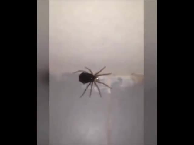 Watch A group of spiders senses danger and transforms into MegaSpider3000 (reddit) GIF on Gfycat. Discover more reversegif GIFs on Gfycat