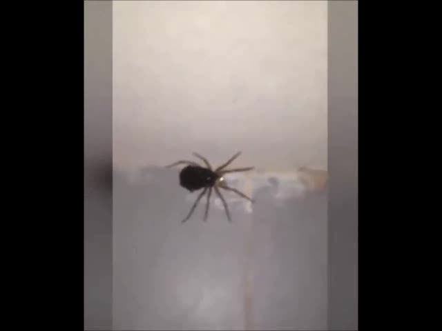 reversegif, A group of spiders senses danger and transforms into MegaSpider3000 (reddit) GIFs