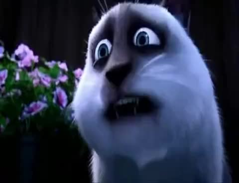 Watch Over the Hedge - STELLAAAAAAA !!!!! GIF on Gfycat. Discover more related GIFs on Gfycat