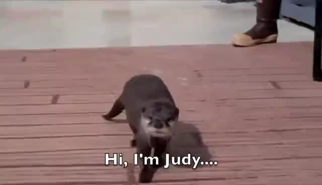 otter, Otter GIFs