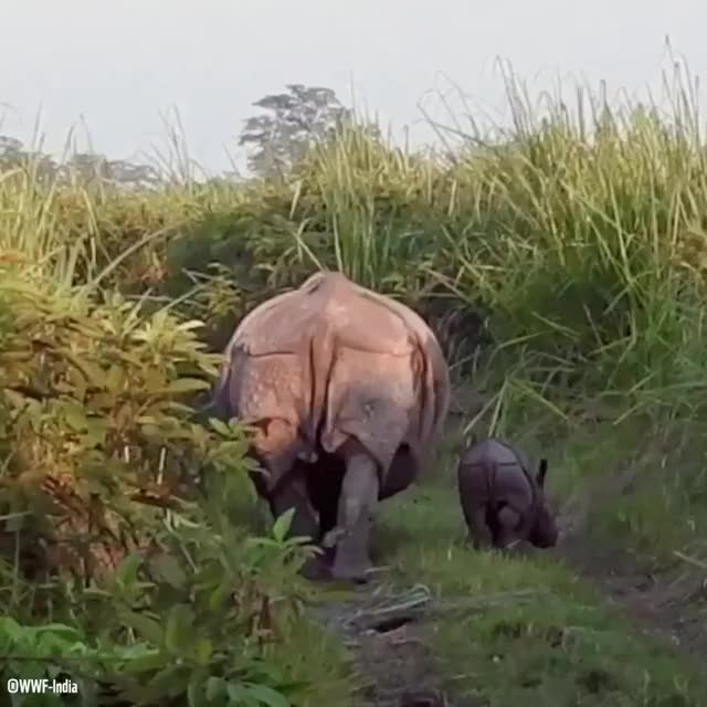 Watch rhino butt GIF on Gfycat. Discover more related GIFs on Gfycat