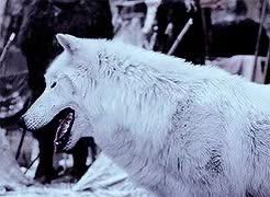 Watch and share Game Of Thrones GIFs and Direwolf Gif GIFs on Gfycat