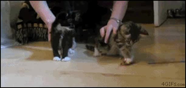 Watch and share more GIFs by sobadsogood on Gfycat