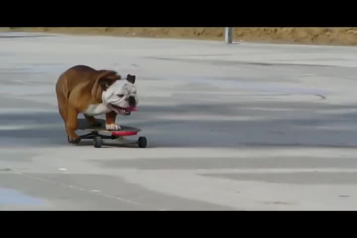 dog, skateboarding, yt:crop=16:9, Skateboarding Dog GIFs