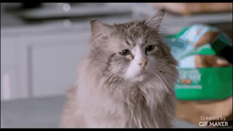 Watch Nine Lives GIF by @comedymovies on Gfycat. Discover more aww, catgifs, funny GIFs on Gfycat