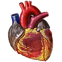Watch and share Circulatory System Pulsing Beating Pumping Animated Gif GIFs on Gfycat