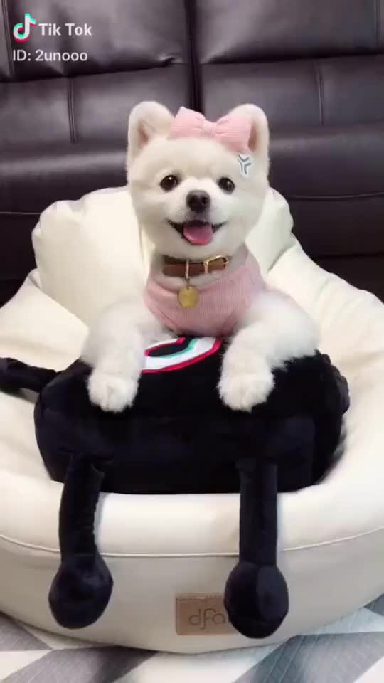 Watch  #dog GIF by TikTok (@helpful_yam) on Gfycat. Discover more dog GIFs on Gfycat