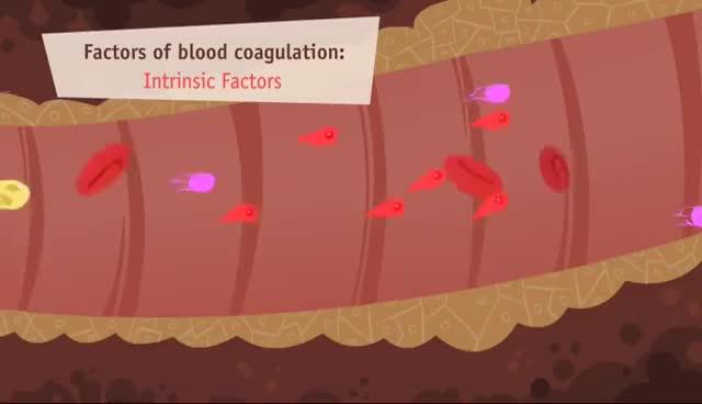 Watch and share Hemostasis, Coagulation And Fibrinolisis GIFs on Gfycat