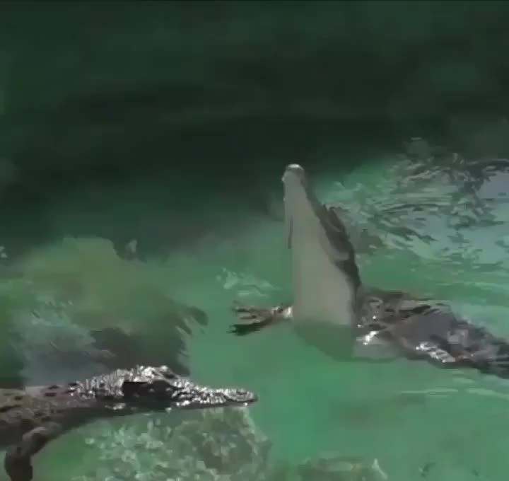 nature, The power of a crocodile's tail GIFs